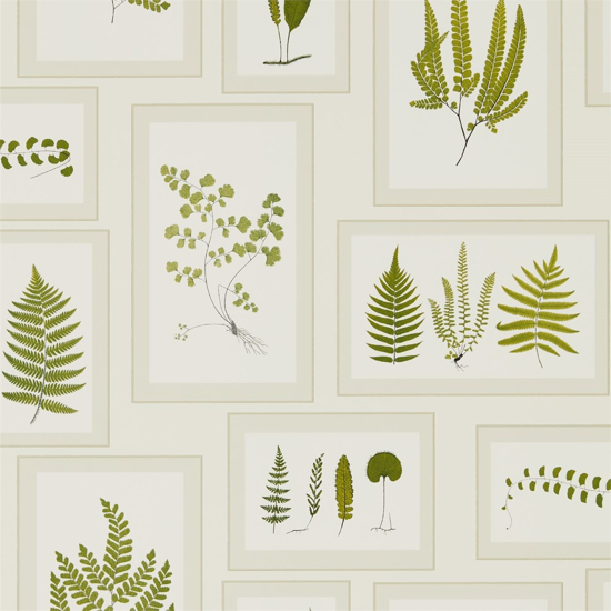 Picture of Fern Gallery Ivory/Green - DWOW215712